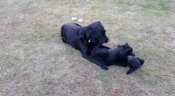 Bella og Becca 1 (1)