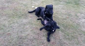 Bella og Becca 1 (3)